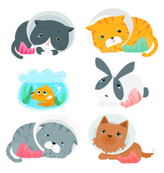 Variety animal splinting pack vector