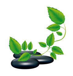 Spa therapy lava stones and creeper plant vector