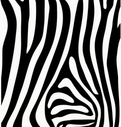 Skin of zebra vector