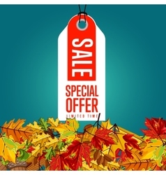 Special offer label limited time vector