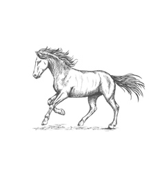 Prancing horse with stmping hoof portrait vector