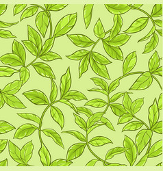 Tea leaves seamless pattern vector