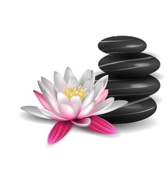 Water lily and zen stones vector