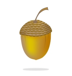 Acorn on white background vector