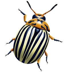 Potato bug vector