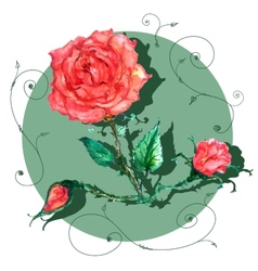 rose in old style vector image