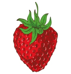 Ripe Red Strawberry vector image