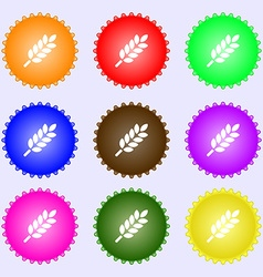 Wheat ears icon sign big set of colorful diverse vector