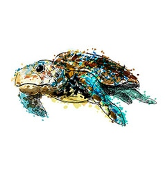 Colored hand drawing caretta vector