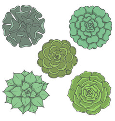 Set of images with ornamental plants vector