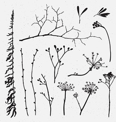 set of silhouettes of flowers and grass on the vector image