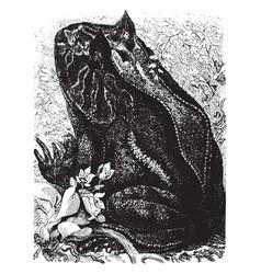 alphabet frog vintage vector image vector image