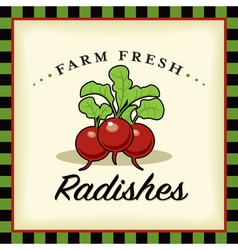 Farm fresh radishes vector