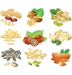 nuts set vector image vector image