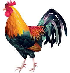 one cock vector image