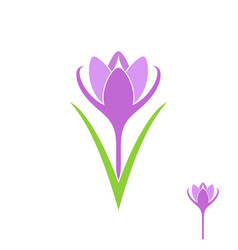 crocus isolated flower on white background vector image vector image