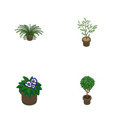 Isometric flower set of plant tree fern and vector
