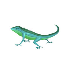 Salamander amphibian animal cartoon vector