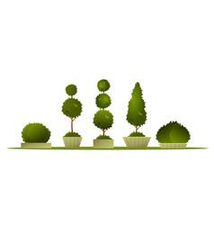 set garden topiary vector image