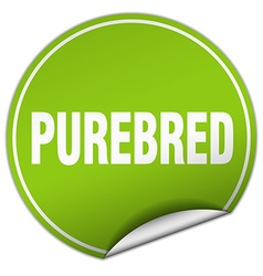 Purebred round green sticker isolated on white vector