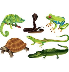 Reptiles amphibia vector