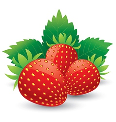 Strawberries with leaves isolated on a white vector