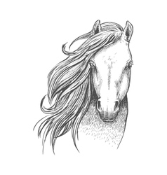 Sketch of wild mustang horse for equine design vector