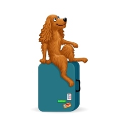 Cartoon dog sitting on a suitcase vector image