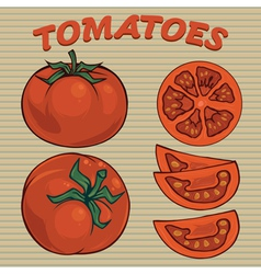 Tomato sethand drawn tomatoes vector