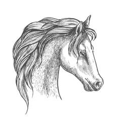 Arabian horse head sketch for equestrian design vector