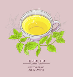 Cup or peppermint tea vector