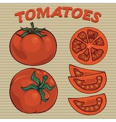 Tomato sethand drawn tomatoes vector