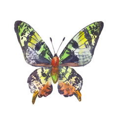 green butterfly watercolor vector image