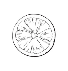 Top view round slice half of ripe grapefruit vector