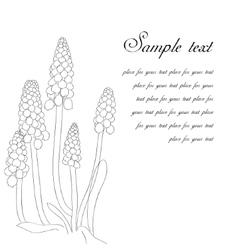 Greeting card with grape hyacinth or muskari vector