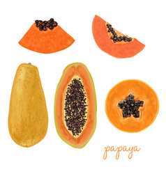 hand drawn delicious papaya vector image vector image