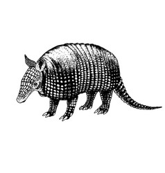 Hand drawn armadillo sketch vector