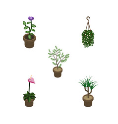 Isometric plant set of fern flower houseplant vector