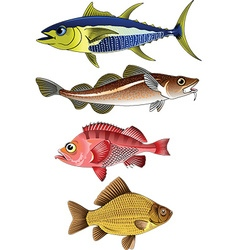 Beautiful fish vector