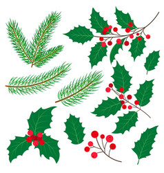 fir tree branches mistletoe leaves and berries vector image vector image