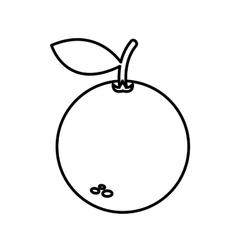 Orange fresh fruit drawing icon vector