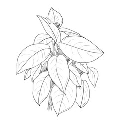Sketch of leafs vector