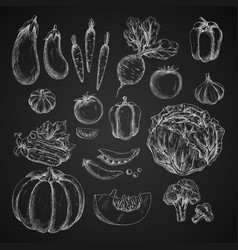 Vegetables isolated icons sketch vector