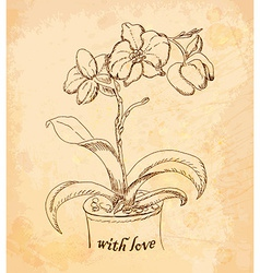 Vintage old background with orchid with love hand vector