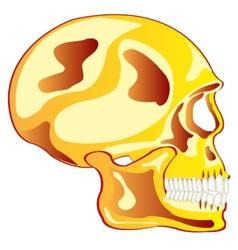 Skull from gild in profile vector
