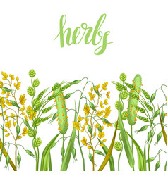 Seamless border with herbs and cereal grass vector