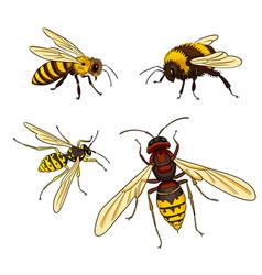 Bee wasp bumblebee horne vector
