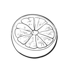 Half of ripe grapefruit orange sketch vector