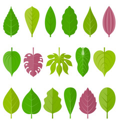 Leaves icon set 1 vector