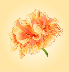 Tropical flowers Yellow hibiscus blossom simple vector image vector image